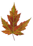 Leaf of autumn stock photography