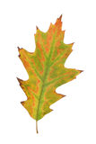 Leaf of autumn stock photos