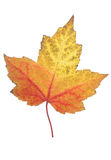 Leaf of autumn royalty free stock photography