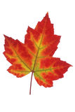 Leaf of autumn stock image