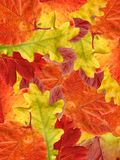 Leaf autumn. Royalty Free Stock Photos