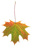 Leaf in autumn Stock Photography