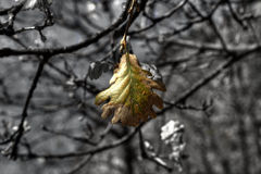 Leaf in Autumn Royalty Free Stock Images