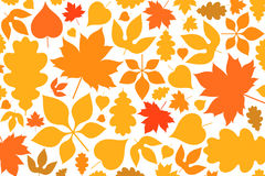 Leaf. Autumn. Abstract leaves on white background Royalty Free Stock Photo