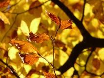 Leaf, Autumn, Deciduous, Flora Royalty Free Stock Photography