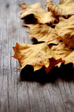 Leaf autumn fallen time leaves on table Stock Photo