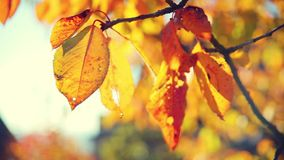 Leaf in autumn. Footage of leaf in autumn stock video