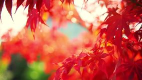 Leaf in autumn. Footage of leaf in autumn stock video footage