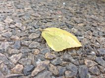 Leaf in autumn. Autumn leaf on the ground Stock Photo