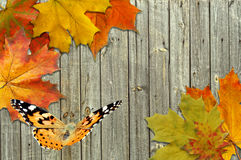 Free Leaf Autumn Maple And Butterfly Royalty Free Stock Photo - 26801025