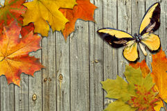 Leaf autumn maple and butterfly Stock Photos