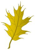 Leaf of an autumn oak Iberian Royalty Free Stock Photography