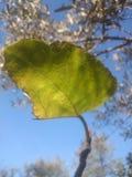 Leaf in autumn stock image