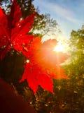 Leaf, autumn, red, beautiful, orange, sun, trees ,branch, maple Royalty Free Stock Photos