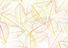 Leaf autumn silhouette Royalty Free Stock Photos