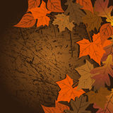 Leaf, autumn - vector background Royalty Free Stock Photo