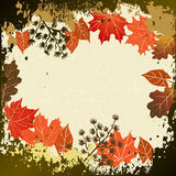 Leaf, autumn - vector background Royalty Free Stock Photography