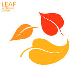 Leaf. Autumn Stock Image