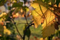 Leaf, Autumn, Yellow, Vegetation