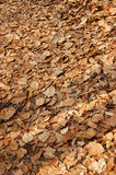Leaf background #1. Brown background royalty free stock image