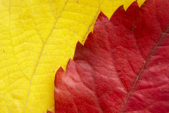 Leaf background 11 Royalty Free Stock Images