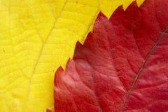 Leaf background 11 Royalty Free Stock Images