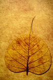 Leaf Background. Grungy leaf drawing on a wall Royalty Free Stock Image