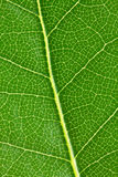 Leaf background Royalty Free Stock Photos