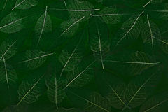 Leaf background. Big green leafs textured background Royalty Free Stock Photo
