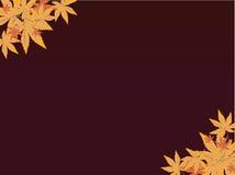 Leaf background stock illustration