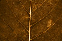 Leaf background. Brown autumn leaf background texture Royalty Free Stock Photo