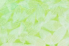 Leaf background Stock Images