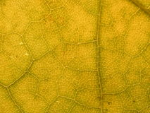 Leaf background 2. Great texture of macro autumn leaf Stock Photography