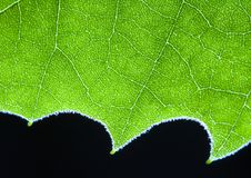 Leaf background Stock Photo