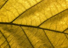 Leaf background Stock Photos