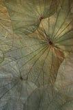 Leaf Background Stock Photography