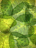 Leaf background Royalty Free Stock Images