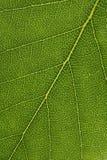 Leaf background Stock Photos