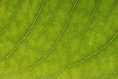 Leaf background Stock Image