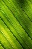 Leaf Background Royalty Free Stock Photos