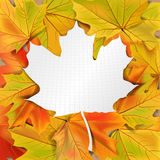 Leaf background. Autumn abstract background with place for text, vector illustration Royalty Free Stock Photography