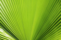 Leaf background. Beautiful green palm leaf background Stock Photography