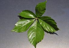 Leaf on background Stock Photos