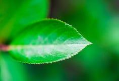 Leaf background Royalty Free Stock Image