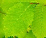 Leaf background. Stock Images