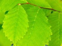 Leaf background. Stock Image
