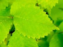 Leaf background. Stock Photos