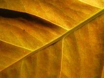 Leaf Background Stock Image