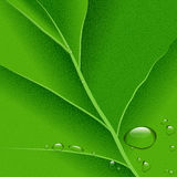 Leaf background. Ector water drops on green leaf macro background, EPS10 Royalty Free Stock Photo