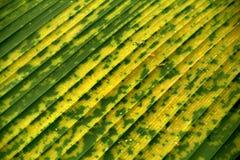 Leaf background Royalty Free Stock Photo